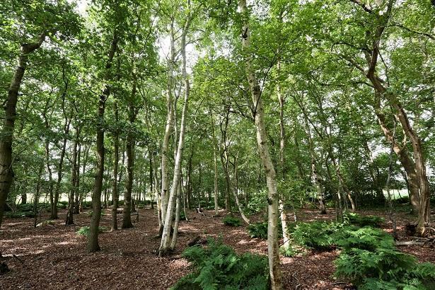 Te koop in assen woonboerderij met bos en land for Bos te koop